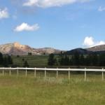 USA-Custer-State-Park-Heideker-Reisen-RH