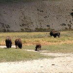 USA-Rundreisen-Yellowstone-Nationalpark-Heideker-Reisen-RH-10