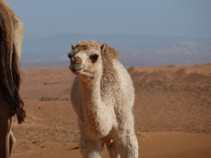 Oman-Rundreise mit Heideker Reisen