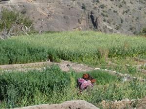 Oman-Sayq Plateau-Al Ayn-Heideker Reisen